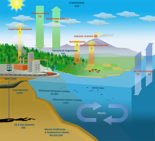 Richardhowe the carbon cycle the carbon cycle is a relatively simple concept there are natural processes that release carbon into the atmosphere and natural processes that remove it ccuart Choice Image